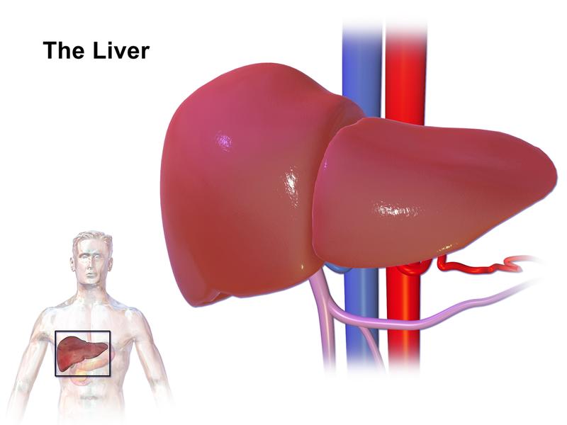 Natural full body detox - liver